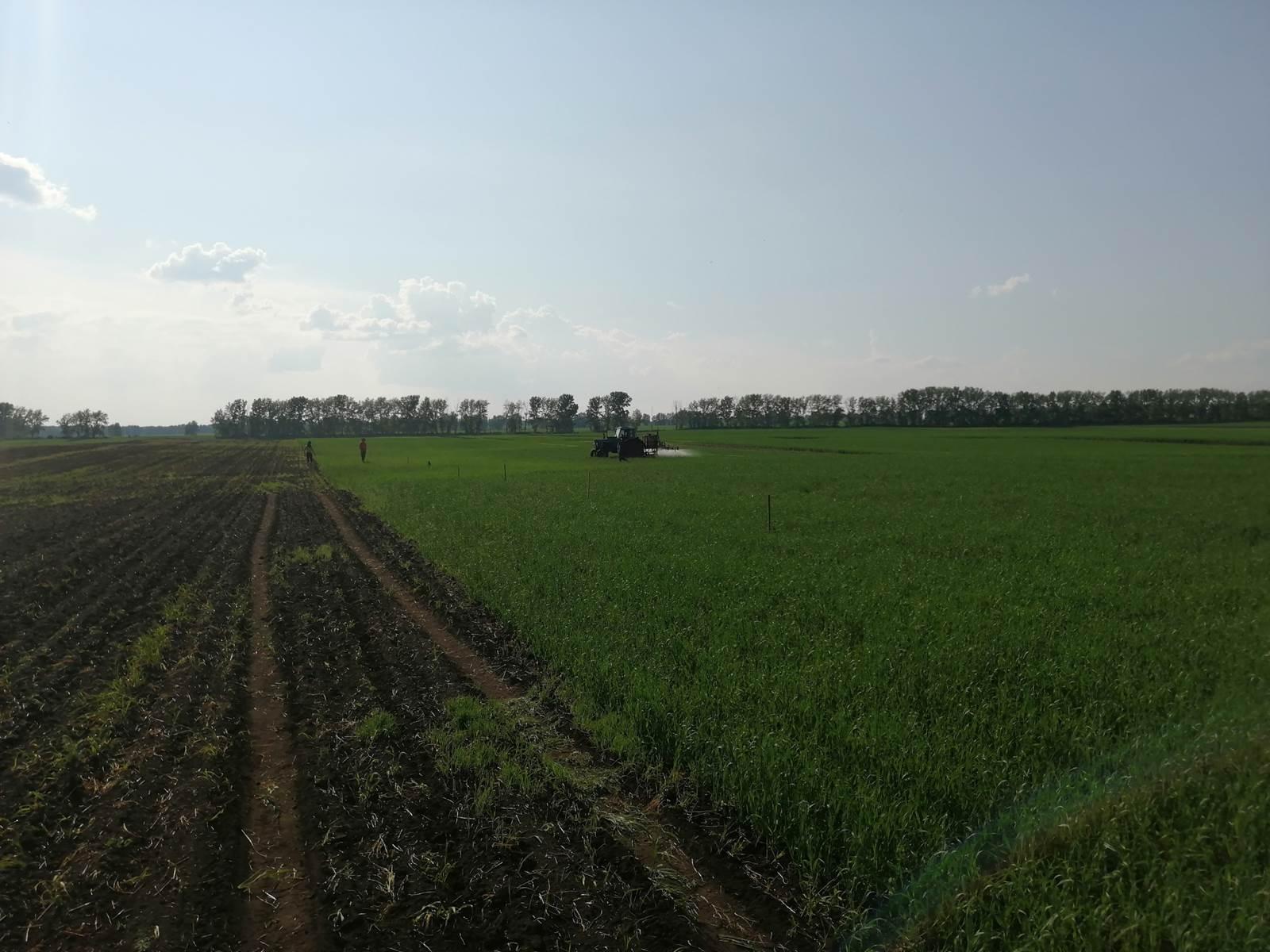 Процесс обработки поля Пшеница яровая препаратами ООО ТД Кирово-Чепецкая Химическая Компания