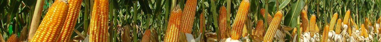 Программа защиты кукурузы