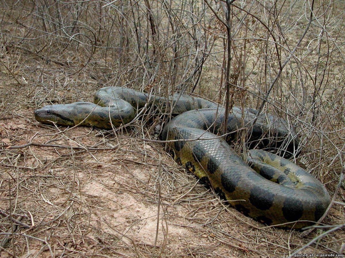 вспоминает самая большая змея в мире смотреть картинки теплый день здесь
