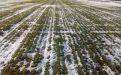 Состояние озимой пшеницы в Ростовской области - Image preview 2