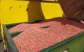 Предпосевная обработка семян - Image preview 2