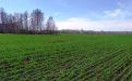 Состояние озимой пшеницы в Сибири - Image preview 2