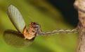 Гусеница моли  - Image preview 3