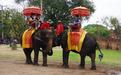 Африканские слоны - Image preview 4