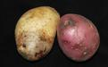 Фитофтороз картофеля - Image preview 2
