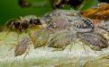 Муравьи вместо инсектицидов - Image preview 3