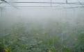 Туманное орошение  - Image preview 2