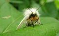 Белая американская бабочка - Image preview 1