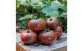 Фиолетовые помидоры - Image preview 2