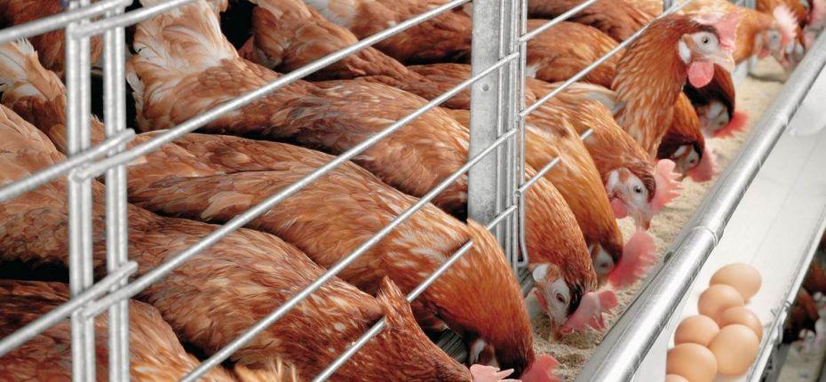 В ООО «Челны-Бройлер» будет запущен новый комплекс по переработке куриного мяса мощностью 144 тонны в сутки - ООО ТД Кирово-Чепецкая Химическая Компания