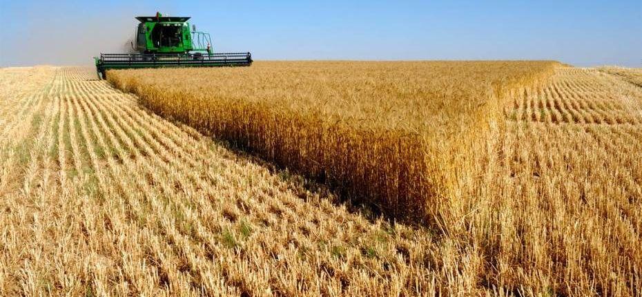 Урожайность зерновых в Тамбовской области превысила 40 ц/га  - ООО ТД Кирово-Чепецкая Химическая Компания