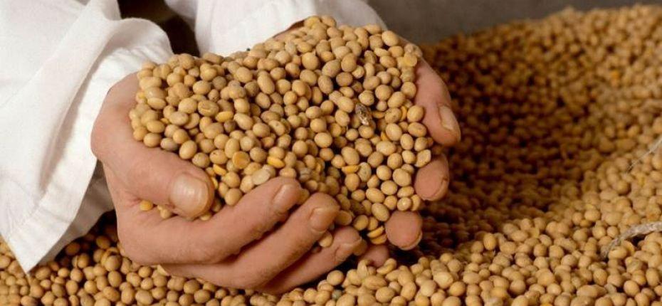 Китай пустил на свой рынок 35 амурских поставщиков сои и кукурузы - ООО ТД Кирово-Чепецкая Химическая Компания