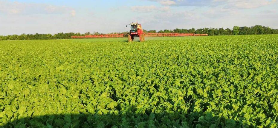 Фунгицидно-инсектицидная защита сахарной свеклы стартовала 21 июня 2019 г - ООО ТД Кирово-Чепецкая Химическая Компания