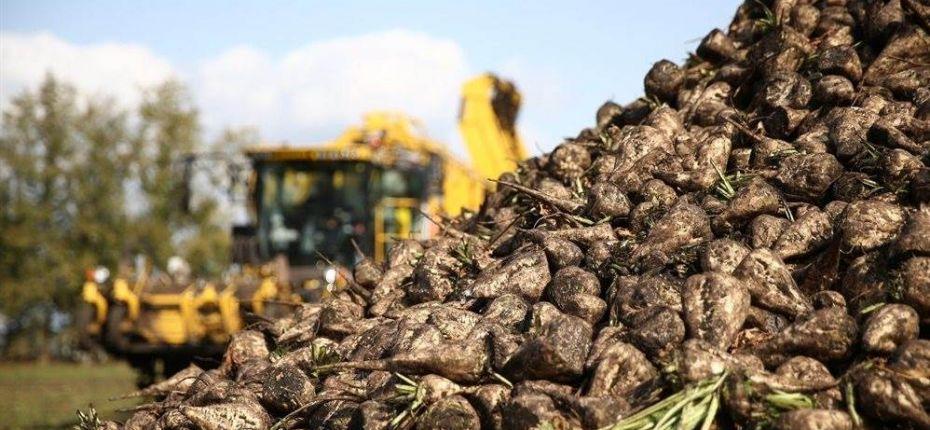 В Пензенской области продолжается уборка сахарной свеклы - ООО ТД Кирово-Чепецкая Химическая Компания
