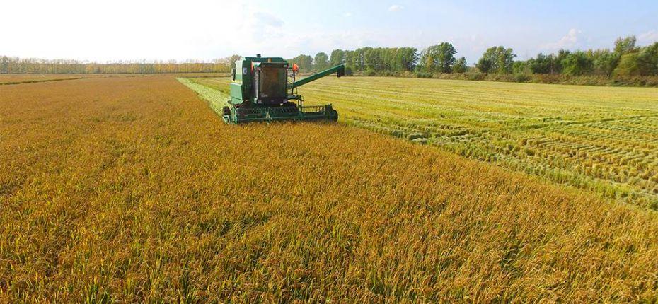 ВДагестане собрали рекордный запоследние 32года урожай риса - ООО ТД Кирово-Чепецкая Химическая Компания