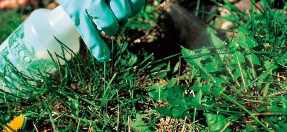 Применение средств защиты растений в 2019 году в Оренбургской области - ООО ТД Кирово-Чепецкая Химическая Компания
