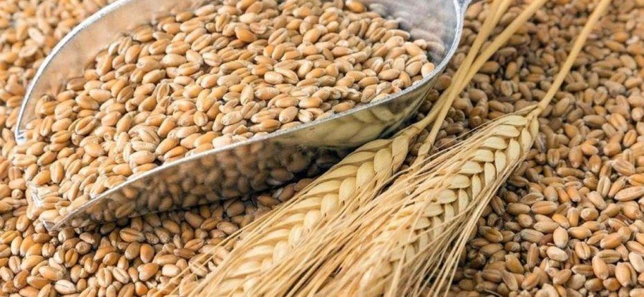 К весенне-полевым работам обеспеченность семенами 98% - ООО ТД Кирово-Чепецкая Химическая Компания