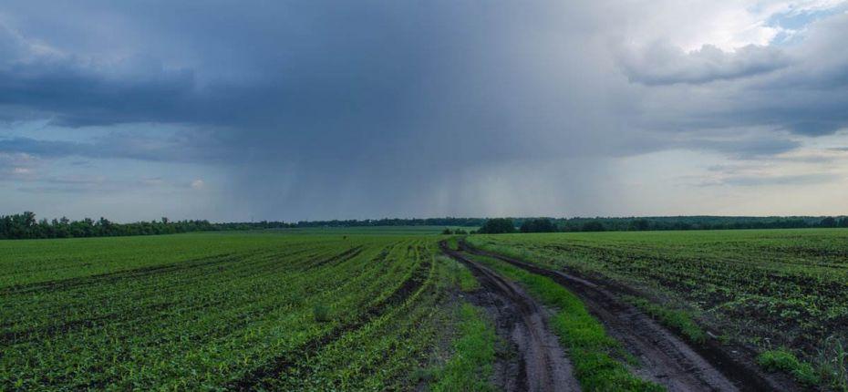 В Пензенской области град уничтожил будущий урожай - ООО ТД Кирово-Чепецкая Химическая Компания