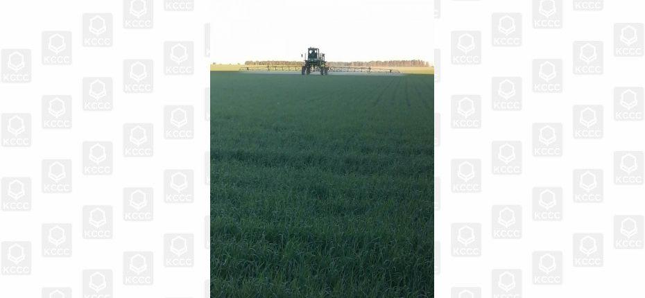 В Омской области превышен порог вредоносности по пшеничному трипсу - ООО ТД Кирово-Чепецкая Химическая Компания
