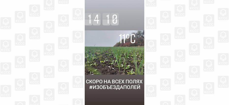 Актуальная ситуация на посевах озимых зерновых в Краснодарском крае. - ООО ТД Кирово-Чепецкая Химическая Компания