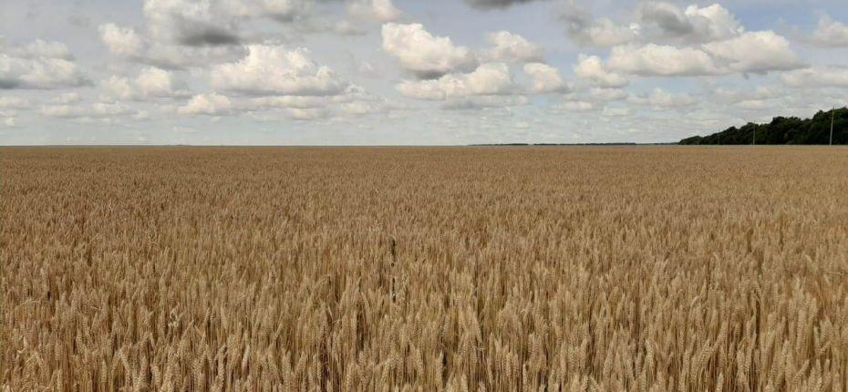 В министерстве сельского хозяйства региона подвели итоги уборочной 2020 года. - ООО ТД Кирово-Чепецкая Химическая Компания