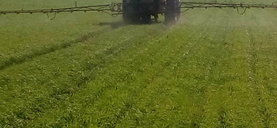 Программы защиты зерновых культур с использованием препаратов ООО Торговый Дом