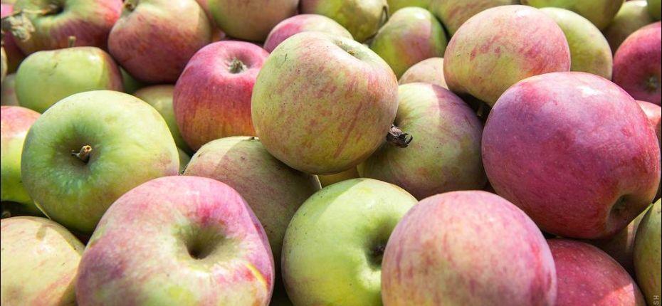 Субсидии для многолетних плодовых и ягодных насаждений - ООО ТД Кирово-Чепецкая Химическая Компания