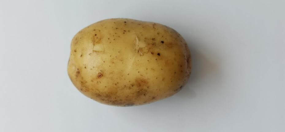 Ранний сорт картофеля Коломбо - ООО ТД Кирово-Чепецкая Химическая Компания