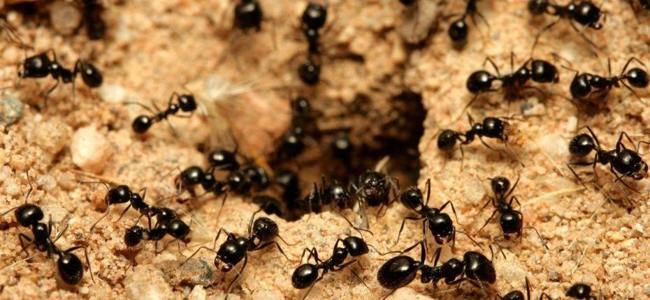 Муравьев на земле больше, чем людей - ООО ТД Кирово-Чепецкая Химическая Компания