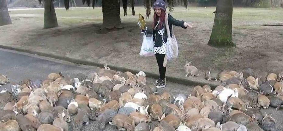 Остров кроликов - ООО ТД Кирово-Чепецкая Химическая Компания