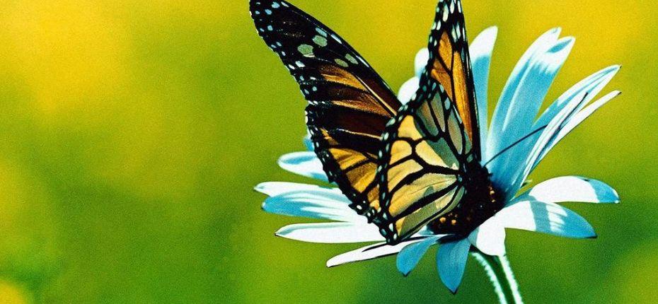 Вкус бабочка чувствует ногами - ООО ТД Кирово-Чепецкая Химическая Компания