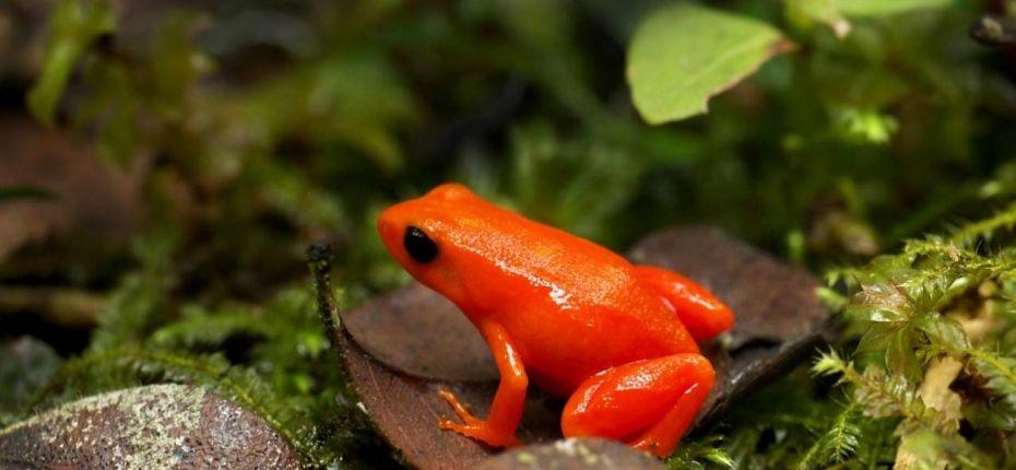 Оранжевая жаба - ООО ТД Кирово-Чепецкая Химическая Компания