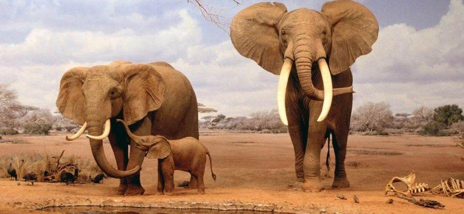 Африканские слоны - ООО ТД Кирово-Чепецкая Химическая Компания