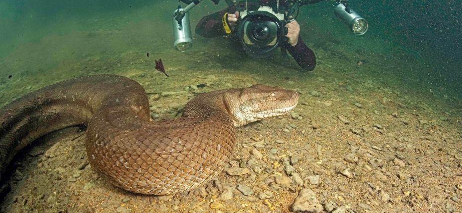 Анаконда — самая большая змея - ООО ТД Кирово-Чепецкая Химическая Компания