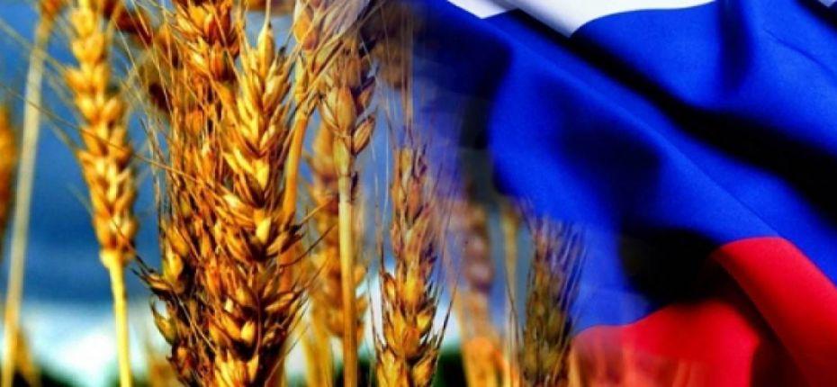 РФ снижает экспорт зерна – Минсельхоз - ООО ТД Кирово-Чепецкая Химическая Компания