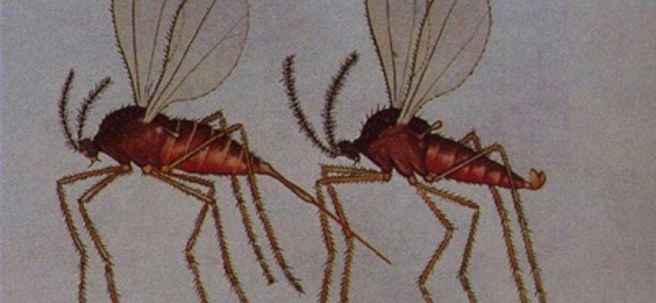 Крошечный просяной комарик - ООО ТД Кирово-Чепецкая Химическая Компания