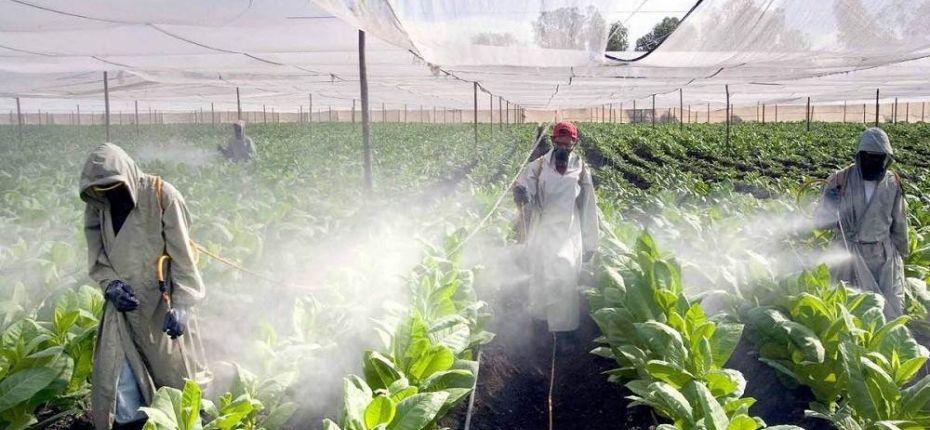 Для защиты урожая ученые создали генномодифицированных насекомых - ООО ТД Кирово-Чепецкая Химическая Компания