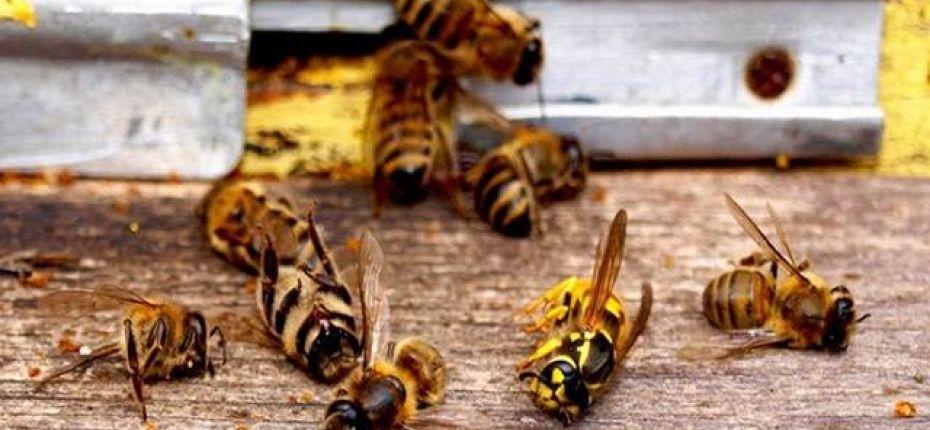В Европе вымирают насекомые - ООО ТД Кирово-Чепецкая Химическая Компания