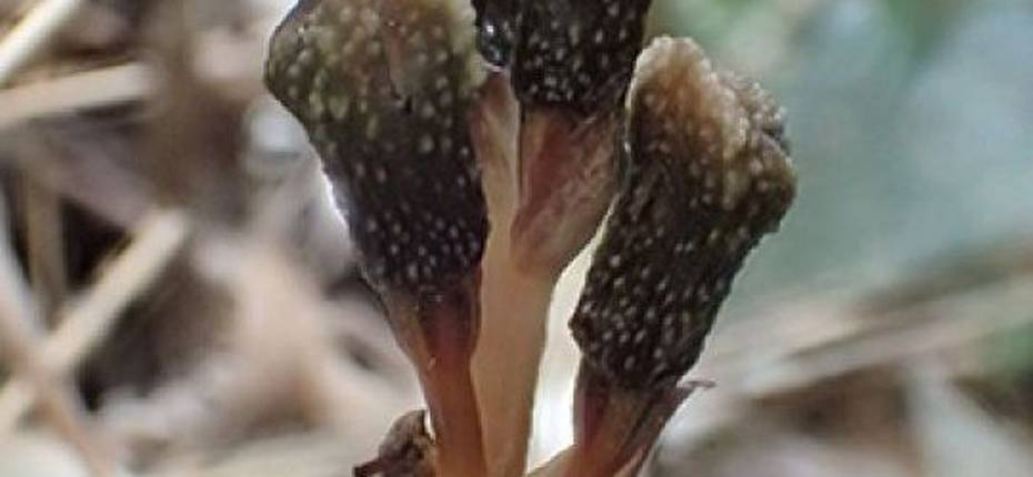 Растение, которое не цветет и живет без фотосинтеза - ООО ТД Кирово-Чепецкая Химическая Компания