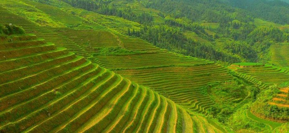 В Китае запущена программа здорового земледелия - ООО ТД Кирово-Чепецкая Химическая Компания