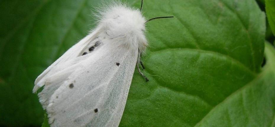 Белая американская бабочка - ООО ТД Кирово-Чепецкая Химическая Компания