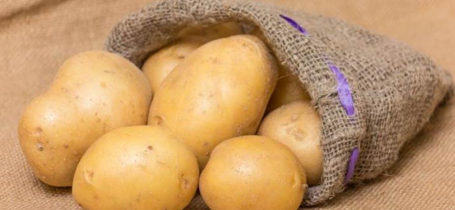 Аграрии создадут новые сорта картофеля - ООО ТД Кирово-Чепецкая Химическая Компания