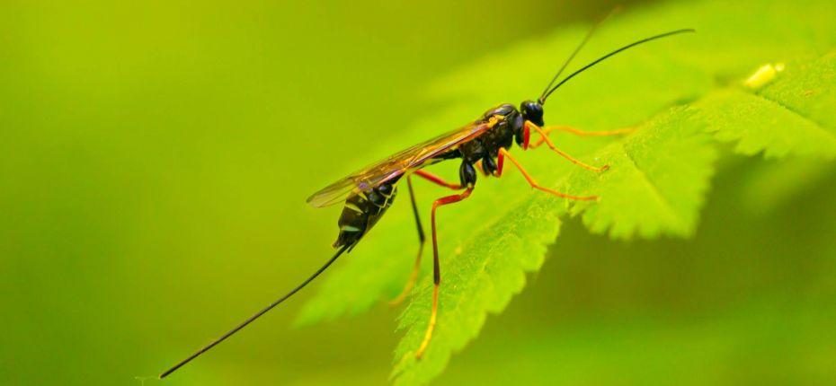 Токсины пауков и ос будут использовать в натуральных инсектицидах - ООО ТД Кирово-Чепецкая Химическая Компания