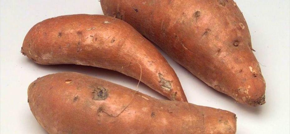 Лучшие сорта сладкого картофеля - ООО ТД Кирово-Чепецкая Химическая Компания