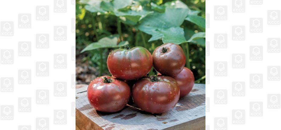Фиолетовые помидоры - ООО ТД Кирово-Чепецкая Химическая Компания