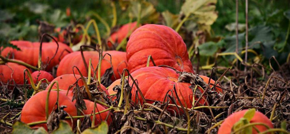 В России появится средство для защиты растений от грибковых инфекций - ООО ТД Кирово-Чепецкая Химическая Компания