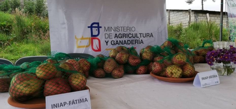 Выведен новый сорт картофеля с коротким циклом вегетации - ООО ТД Кирово-Чепецкая Химическая Компания
