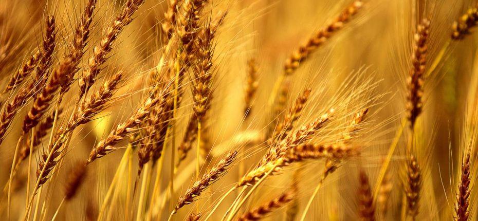 Производство российской ржи в 2019 году снизилось до 10-летнего минимума - ООО ТД Кирово-Чепецкая Химическая Компания