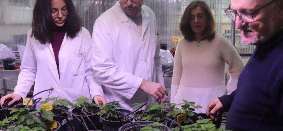 Ученые создают идеальную клубнику  - ООО ТД Кирово-Чепецкая Химическая Компания