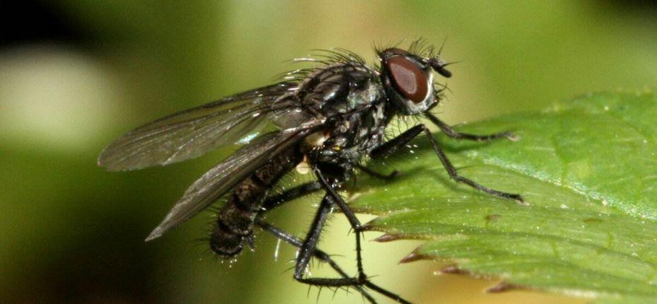 Защита редиса от капустной мухи. - ООО ТД Кирово-Чепецкая Химическая Компания